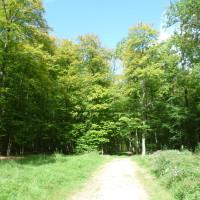 A28 exit 19 forest dog walk near Alencon, France - Image 3