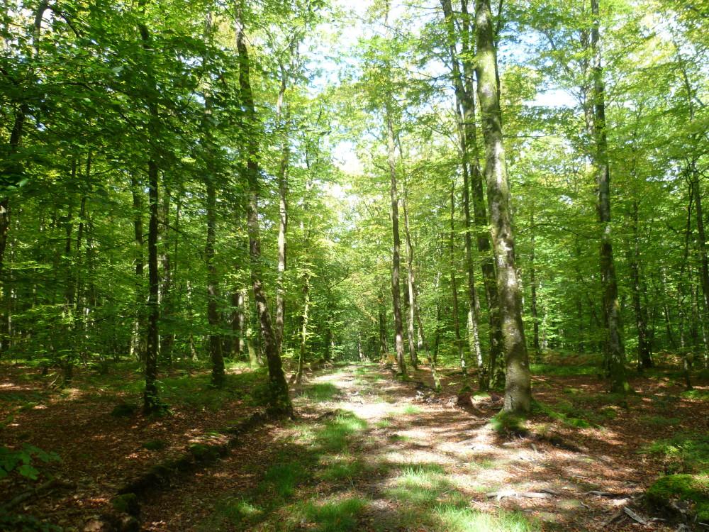 A28 exit 19 forest dog walk near Alencon, France - Image 4
