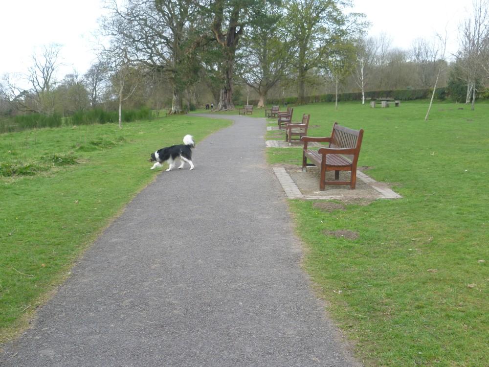 A82 dog walk near Dumbarton, Scotland - Dog walks in Scotland