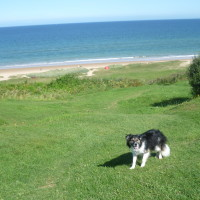 Cherbourg Peninsula dog-friendly beach, France - Image 2