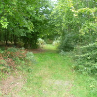 A16 exit 25 Forest of Crecy dog walk, France - Image 2