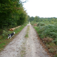 A16 exit 25 Forest of Crecy dog walk, France - Image 3