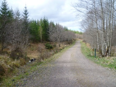 Forest dog walk near Oban, Scotland - Driving with Dogs