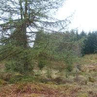 A9 dog walk in the Cairngorms, Scotland - Dog walks in Scotland