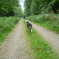 A29 exit 11 dog walk in the Forest of Eu, France - Image 1