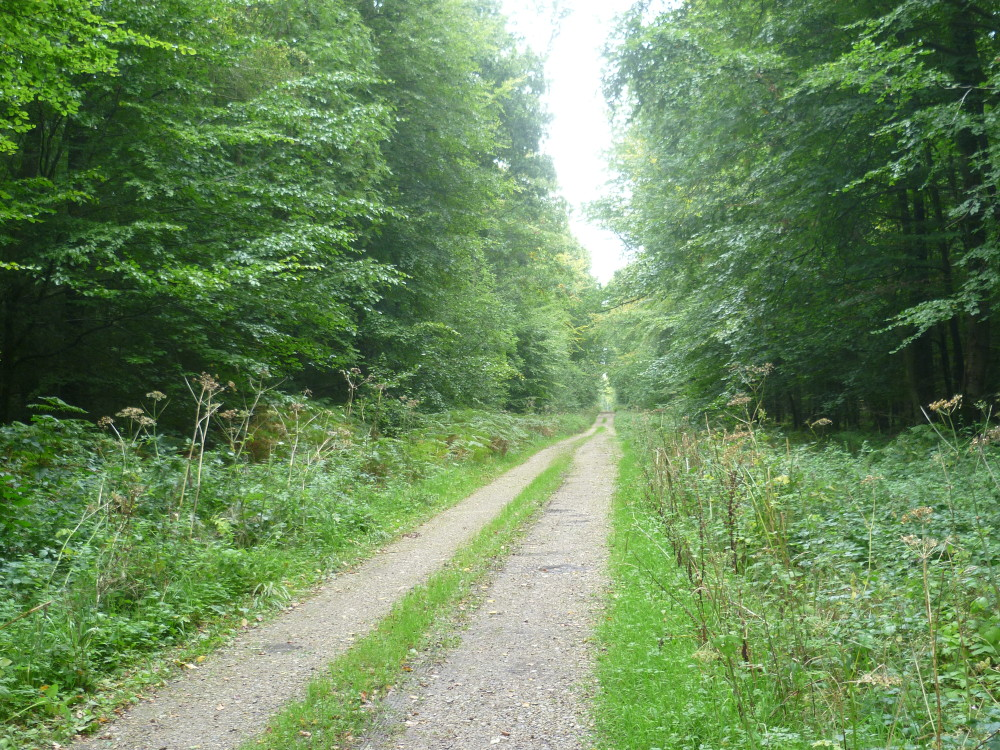 A29 exit 11 dog walk in the Forest of Eu, France - Image 3