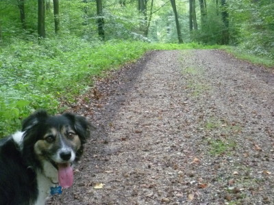 A28 exit 6 Forest dog walk near Foucarmont, France - Driving with Dogs