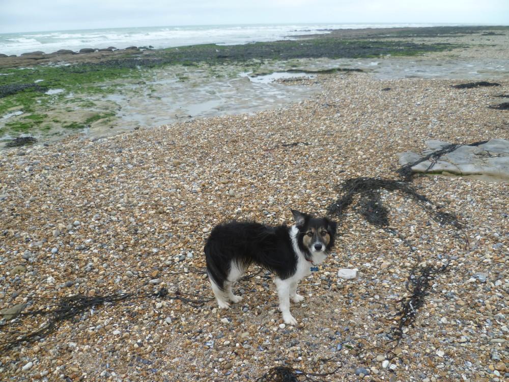 Ambleteuse dog-friendly beach and dog walk, France - Image 3