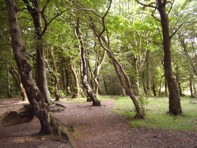 Wheata Woods dog walk, Sheffield, Yorkshire - Driving with Dogs