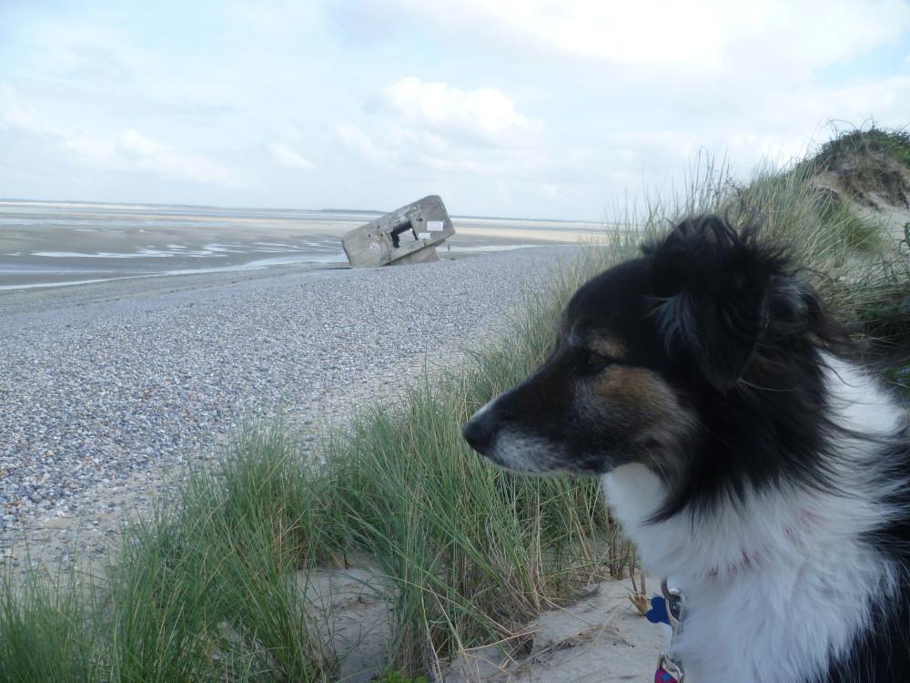 Somme dog walk, France - Image 2