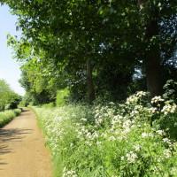 Old dog-friendly pub and dog walk, Northamptonshire - Dog walks in Northamptonshire