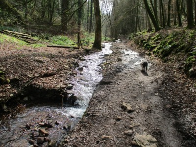 A38 Dog-friendly B&B and excellent dog walks near Cheddar, Somerset - Driving with Dogs