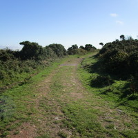 Beacon dog walk and viewpoint, Somerset - Dog walks in Somerset