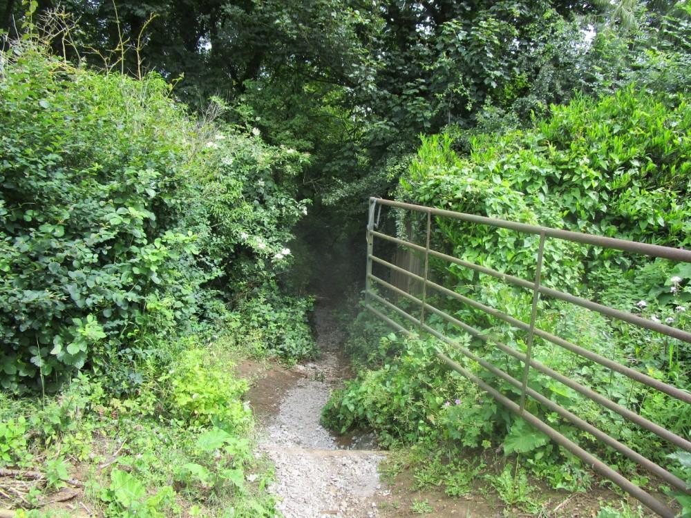 Dog walk and dog-friendly pub with a battlefield view, Warwickshire - Warwickshire dog-friendly pubs and dog walks.JPG