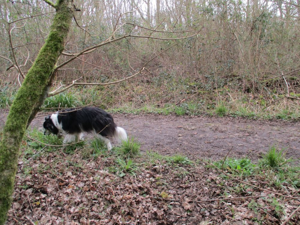 Green Lane Wood, Wiltshire - Wiltshire dog walk