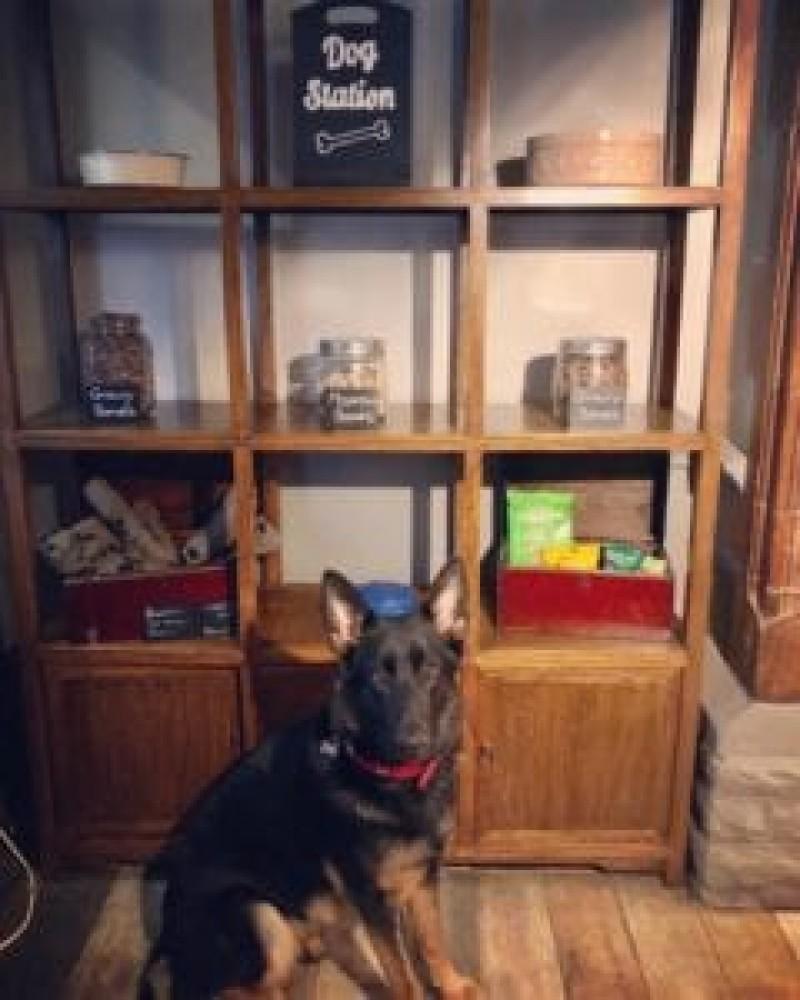 Shackleford dog walk and dog-friendly pub, Surrey - Dog-friendly pub and dog walk near Godalming