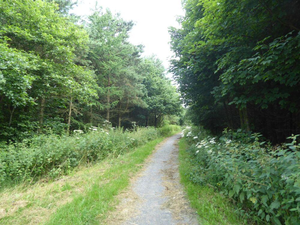 Deerness Valley dog walk, County Durham - P1020453.JPG