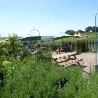 Dog-friendly lavender gardens and tea room, North Yorkshire - Yorkshire dog-friendly attractions