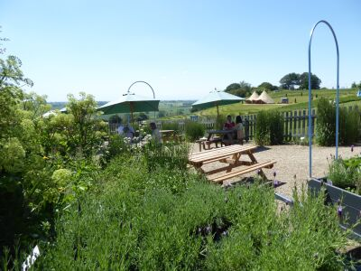Dog-friendly lavender gardens and tea room, North Yorkshire - Driving with Dogs