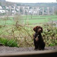 Cotehele Quay to Lower Kelly dog walk, Cornwall - 2018-04-07-5562.jpg