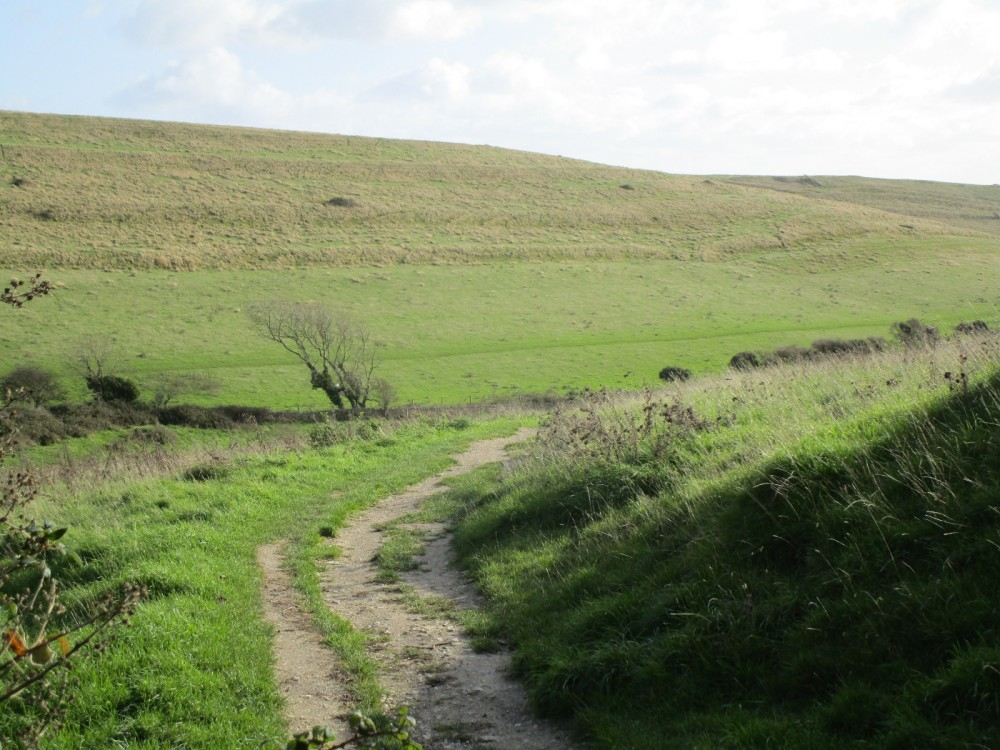 Really good dog walks and a quirky pub near Swanage, Dorset - IMG_6456.JPG