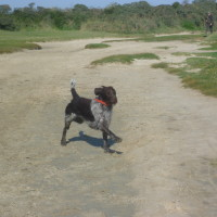 A16 exit 25 dog walk near Fort Mahon, France - Image 1