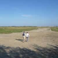 A16 exit 25 dog walk near Fort Mahon, France - Image 4