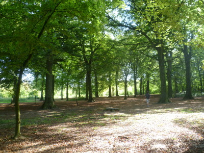 A16 exit 38 National Forest dog walk near Guines, France - Driving with Dogs