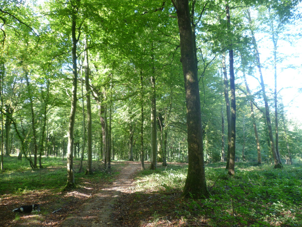 A16 exit 38 National Forest dog walk near Guines, France - Image 3