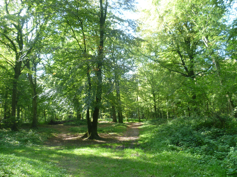 A16 exit 38 National Forest dog walk near Guines, France - Image 4