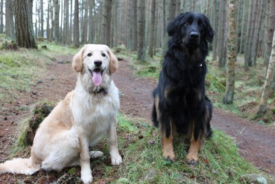 A93 dog walk at Crathes Castle, Scotland - Driving with Dogs