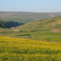 Upper Swaledale dog-friendly pub and dog walks, North Yorkshire - Image 2