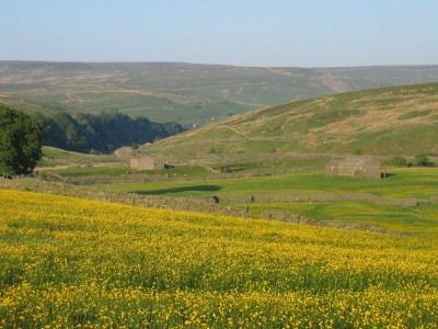 Upper Swaledale dog-friendly pub and dog walks, North Yorkshire - Driving with Dogs