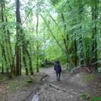 Dog walk in woodland near Ruthin, Wales - Dog walks in Wales