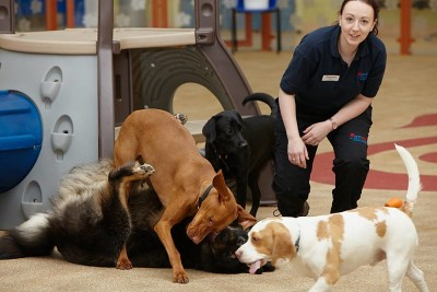 My Pet Stop, Tingley, West Yorkshire - Driving with Dogs
