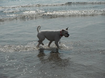 Aberdovey dog-friendly beach, Wales - Driving with Dogs