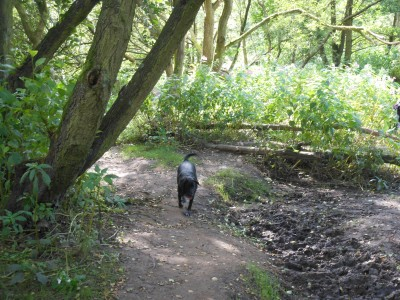 M6 Jct 28 Cuerden Valley dog walks, Lancashire - Driving with Dogs