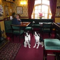 Doggiestop between Oswestry and Welshpool, Wales - Dog walks in Wales