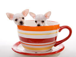A10 dog-friendly cafe and dog walk, Hertfordshire - Driving with Dogs