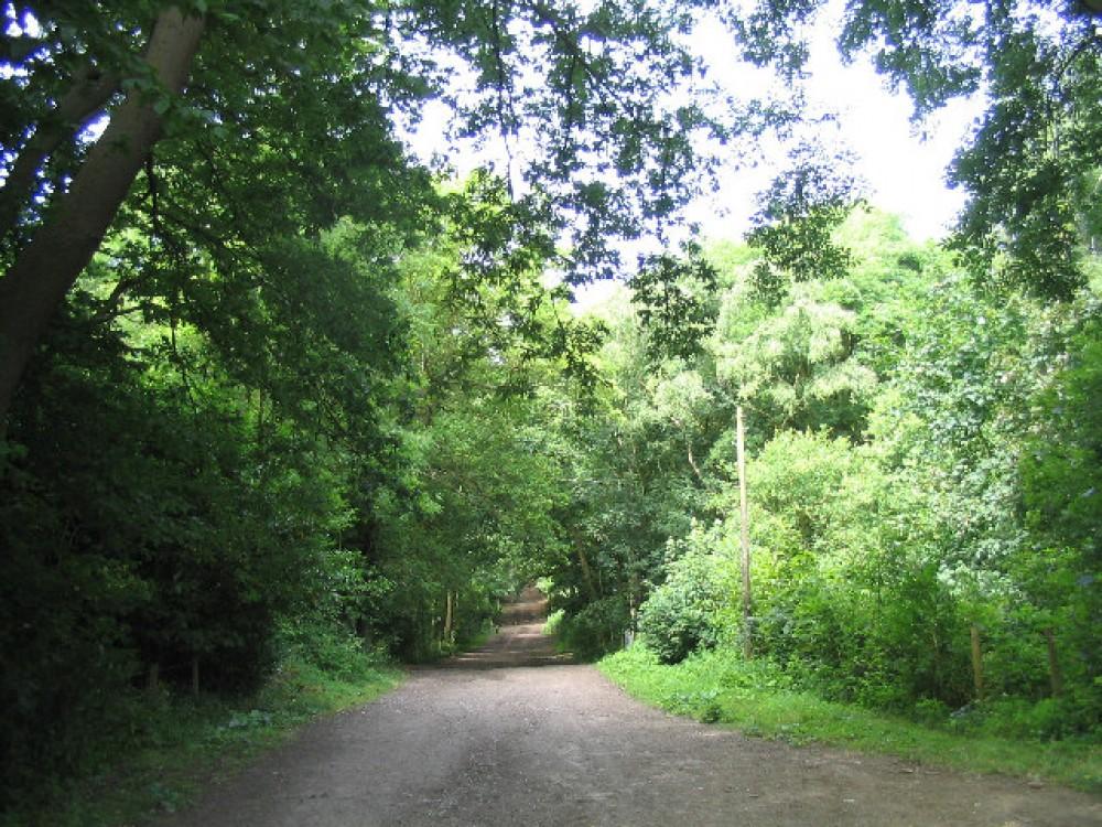 Havering Country Park dog walks, Essex - Dog walks in Essex