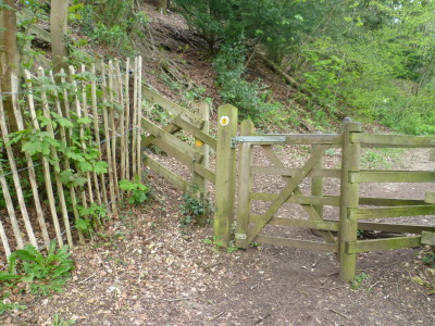A46 hillside dog walk, Gloucestershire - Driving with Dogs