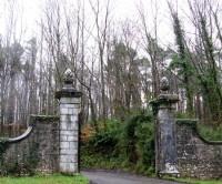Forest dog walk near Limerick, RoI - Dog walks in Ireland