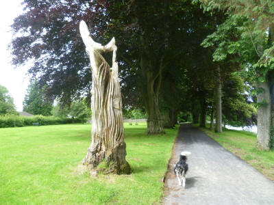 A470 Builth Wells dog walk, Wales - Driving with Dogs