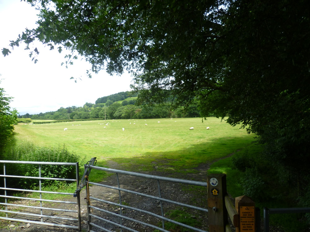 A470 Builth Wells dog walk, Wales - Dog walks in Wales