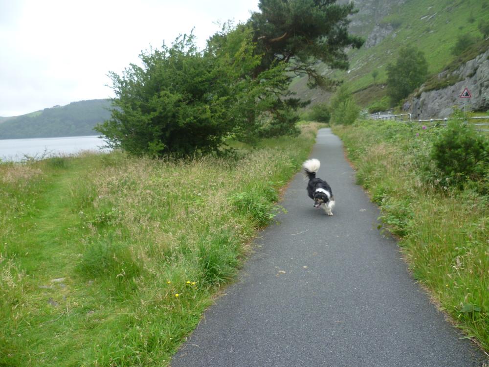 Dog walk near Rhayader, Wales - Dog walks in Wales