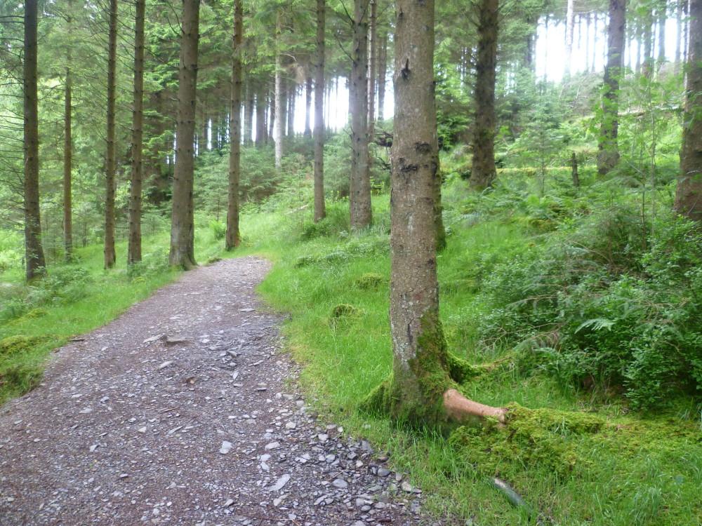 Dog walk near Llanidloes, Powys, Wales - Dog walks in Wales