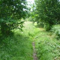 Victoriana dog walk near Llandrindod Wells, Wales - Dog walks in Wales