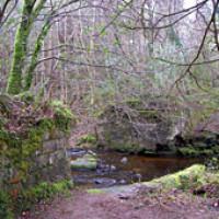 Woodland dog walk in Brittas, RoI - Dog walks in Ireland