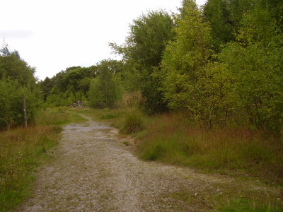 Woodland dog walk near Durrow, RoI - Driving with Dogs