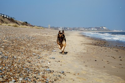 Pakefield dog-friendly beach, Lowestoft, Suffolk - Driving with Dogs